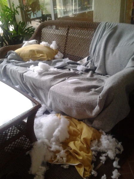 The scene of the crime.  Somebody call CSI and let's get some paw prints!